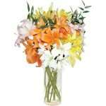 10 mixed asiatic lillies
