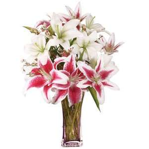 Asiatic and strazier lillies