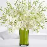 Deluxe White Dendrobium Orchids