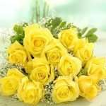 Long stem yellow roses bunch