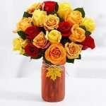 18 Autumn roses
